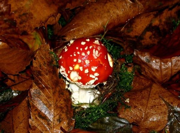 Les champignons  - Page 2 09893677