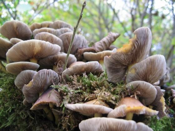 Les champignons  - Page 2 7ea71708