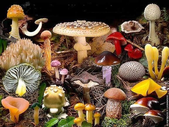 Les champignons  - Page 2 9303e8d4