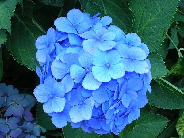 images bleues