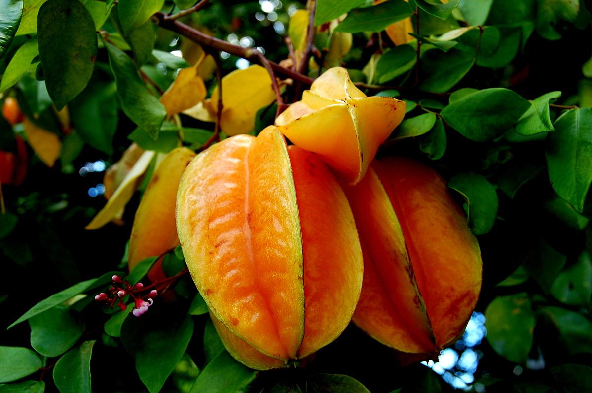 Fruits exotiques - Image fruit exotique ...