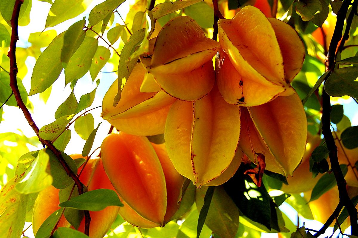Fruits exotiques page 3 - Image fruit exotique ...